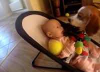 დამნაშავე ძაღლმა გამოსავალი იპოვა, რათა ბავშვისთვის პატიება ეთხოვა (+ვიდეო)