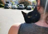 ძაღლმა გადაარჩინა კატა, რომელიც 2 თვე დამწვარი სახლის ნანგრევებიდან ვერ გამოდიოდა