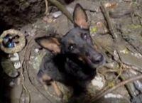 როდესაც ჭაში ჩავარდნილმა ძაღლმა ადამიანი დაინახა, სიხარულისგან ყმუილი დაიწყო (+ვიდეო)