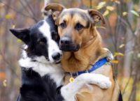 როგორი რეაქცია აქვს ძაღლს, როდესაც ეკითხებიან ვინ არის მისი საუკეთესო მეგობარი...(+ვიდეო)