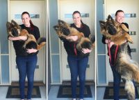 წყვილმა დააფიქსირა, თუ რა სწრაფად გაიზარდა მათი ძაღლი