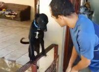 დამნაშავე ძაღლი პატრონისგან პატიებას სასაცილოდ  ითხოვს (+ვიდეო)