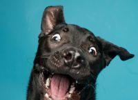 ქარიზმატული ძაღლები, რომლებსაც ჩვენთვის თითქოს რაღაცის თქმა უნდათ (+ფოტო)
