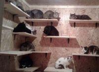 გარდაცვლილი პენსიონერის ბინიდან 19 კატა გადაარჩინეს