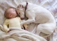 ისტორია ძაღლზე, რომელიც  მხოლოდ ბავშვს ენდობა