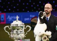ინგლისში გამართულ  კონკურსში, ევროპის ყველაზე ლამაზი ძაღლი გამოავლინეს