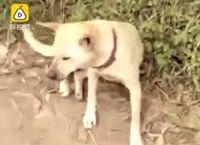 ძაღლმა ცოცხლად დამარხული ბავშვი  გადაარჩინა (+ვიდეო)