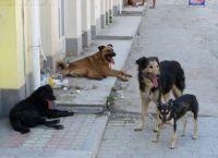 უპატრონო ძაღლების ხროვამ გოგონები მძარცველებისგან იხსნა