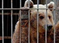მოსულის ზოოპარკში მიტოვებული ლომი და დათვი გადაარჩინეს