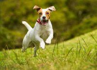 5 რჩევა, თუ როგორ უნდა დაამშვიდოთ ჰიპერაქტიური ძაღლი