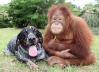 ძაღლები და მაიმუნები ადამიანს ისეთად ხედავენ, როგორიც ის სინამდვილეშია