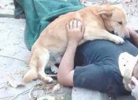 ხიდან ჩამოვარდნილ პატრონს  ძაღლი სასწრაფოს მოსვლამდე ეხუტებოდა