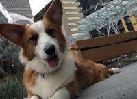 უმსხვილესმა ინტერნეტ პორტალმა Amazon- მა  საკუთარი ოფისის ტერიტორიაზე თანამშრომლების ძაღლებისთვის პარკი გახსნა