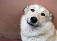 ძაღლი ათბობდა 2 წლის ბავშვს, რომელიც დედამ ყინვაში მიატოვა