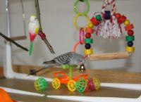 სათამაშოები ტალღოვანი თუთიყუშისთვის