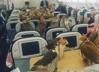 საუდის პრინცმა, საკუთარი  ფრინველებისთვის, თვითმფრინავის 80  ბილეთი იყიდა