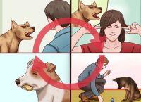 5 საშუალება, რომ ძაღლმა მოთხოვნების მიზნით ყეფა შეწყვიტოს
