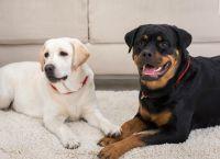 5 მიზეზი, თუ რატომ უნდა აიყვანოთ ძაღლი