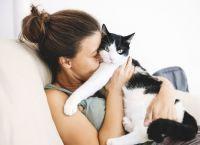10 მიზეზი, თუ რატომ უნდა აიყვანოთ კატა