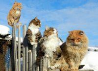 რომელ ქვეყანაში ყავთ ყველაზე მეტი კატა?!