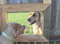 მან ღობეს ფანჯარა გაუკეთა, რომ ძაღლებს ერთმანეთთან ურთიერთობა შეძლებოდათ (+ფოტო)