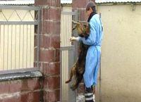 როგორც ცხოველთა დაცვის ფედერაცია აცხადებს - ქუთაისში მაწანწალა ძაღლების დახოცვა იგეგმება