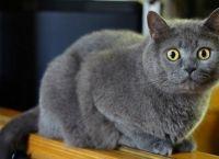 ძაღლმა ცოცხლად დამარხული კატა სიკვდილისგან იხსნა