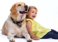 იპოვეთ, რომელი ძაღლის ჯიში იყო ყველაზე პოპულარული იმ წელს, როცა თქვენ დაიბადეთ