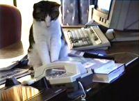 კუდიანი მდივანი: კატა ოფისში ტელეფონის ზარებს პასუხობს (+ვიდეო)