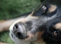 მამაკაცი ძაღლს ცეცხლსასროლი იარაღიდან ესროდა, თუმცა ცხოველს პატრონი გადაეფარა