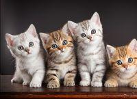 როგორ გავაჩუქოთ/გავყიდოთ კნუტები?