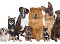 რატომ განსხვავდებიან გარეგნულად ძაღლები ერთმანეთისგან?