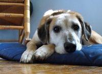 6 ნიშანი, რომ თქვენი ძაღლი მეტ სითბოსა და სიყვარულს ითხოვს